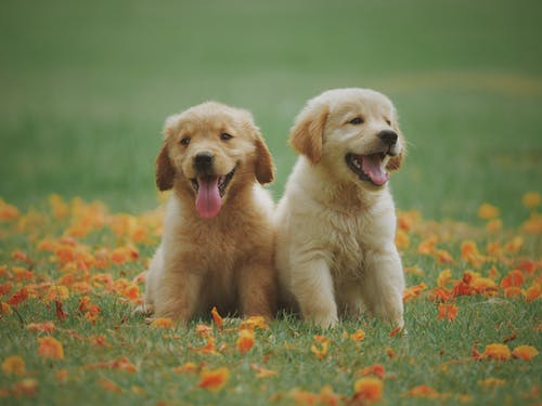 The main reasons to give chiropractic treatments for your pets