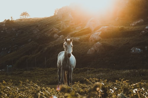 Maintaining proper care for your horse