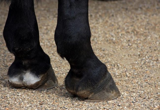 Top horse care tips on maintaining healthy and strong hooves